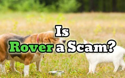 Is Rover a Scam? The Uncensored Review!