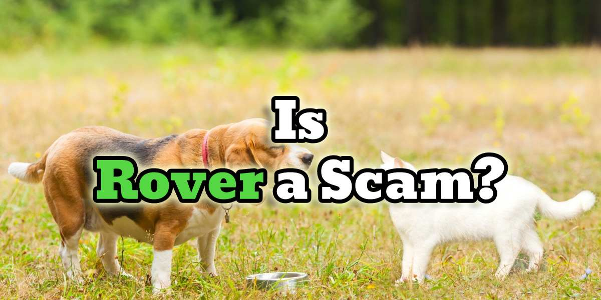 is rover a scam